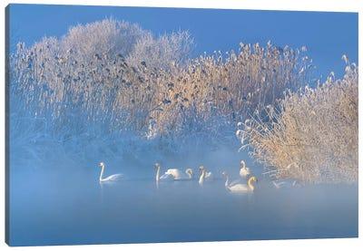 Blue Swan Lake Canvas Art Print