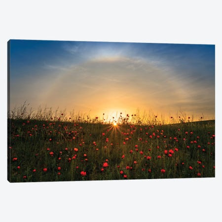 Red Poppies And Sunrise Canvas Print #HZH23} by Hua Zhu Canvas Print