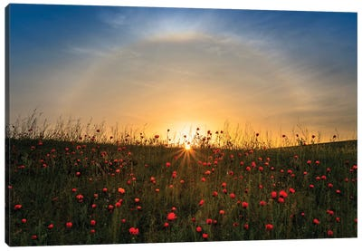 Red Poppies And Sunrise Canvas Art Print