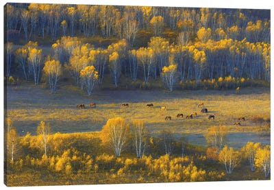 Fall Serenity Canvas Art Print