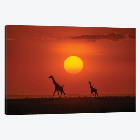 Giraffes In The Sunset Canvas Print #HZH33} by Hua Zhu Canvas Artwork