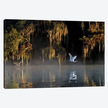Egret Canvas Print #HZH5} by Hua Zhu Canvas Print