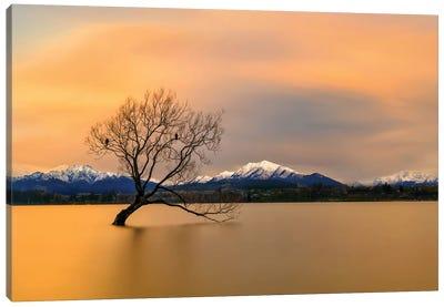 Morning Glow Of The Lake Wanaka Canvas Art Print