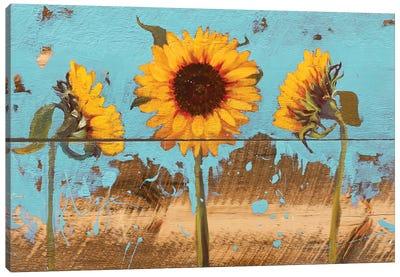 Sunflowers On Wood IV Canvas Art Print