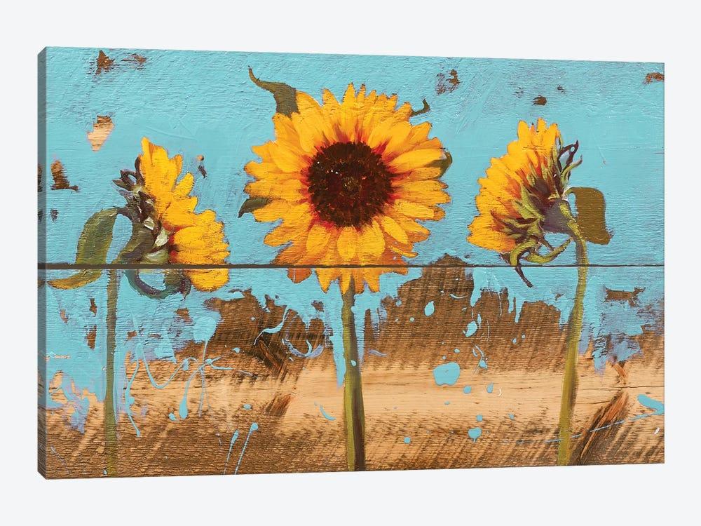 Sunflowers On Wood IV by Sandra Iafrate 1-piece Canvas Art Print