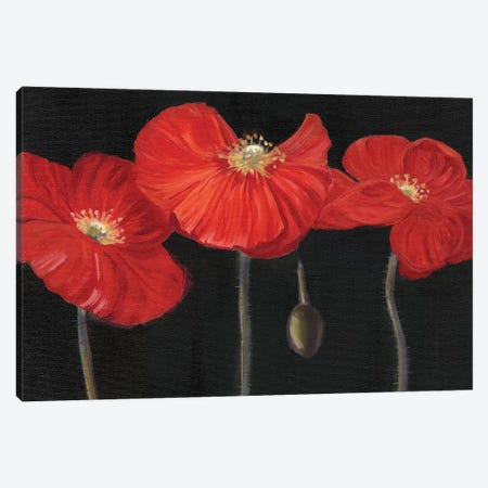 Poppy Trio I Canvas Print #IAF31} by Sandra Iafrate Canvas Art