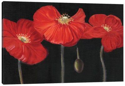 Poppy Trio I Canvas Art Print