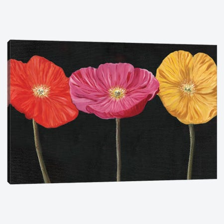 Poppy Trio II Canvas Print #IAF32} by Sandra Iafrate Canvas Artwork