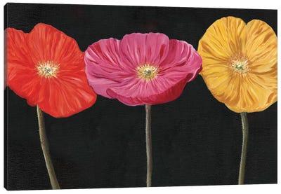 Poppy Trio II Canvas Art Print
