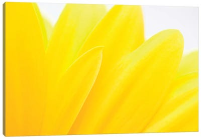 Flower Petals, Germany Canvas Art Print
