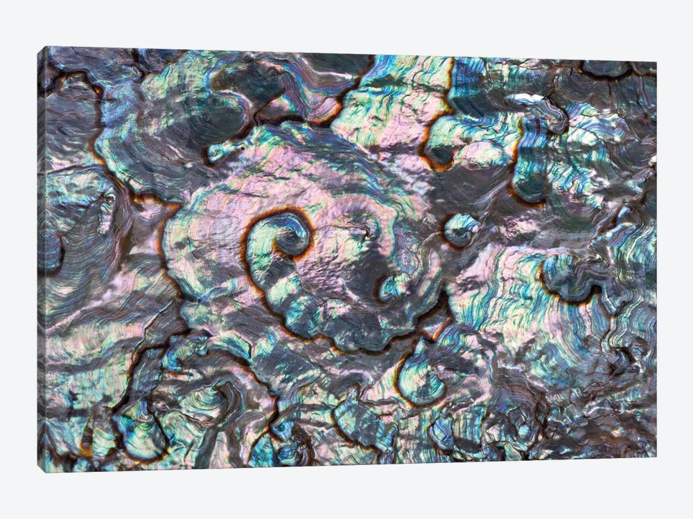 Green Abalone Shell Interior From Baja California, Collection Meeresmuseum Ozeania, Riedenburg, Germany by Ingo Arndt 1-piece Canvas Wall Art