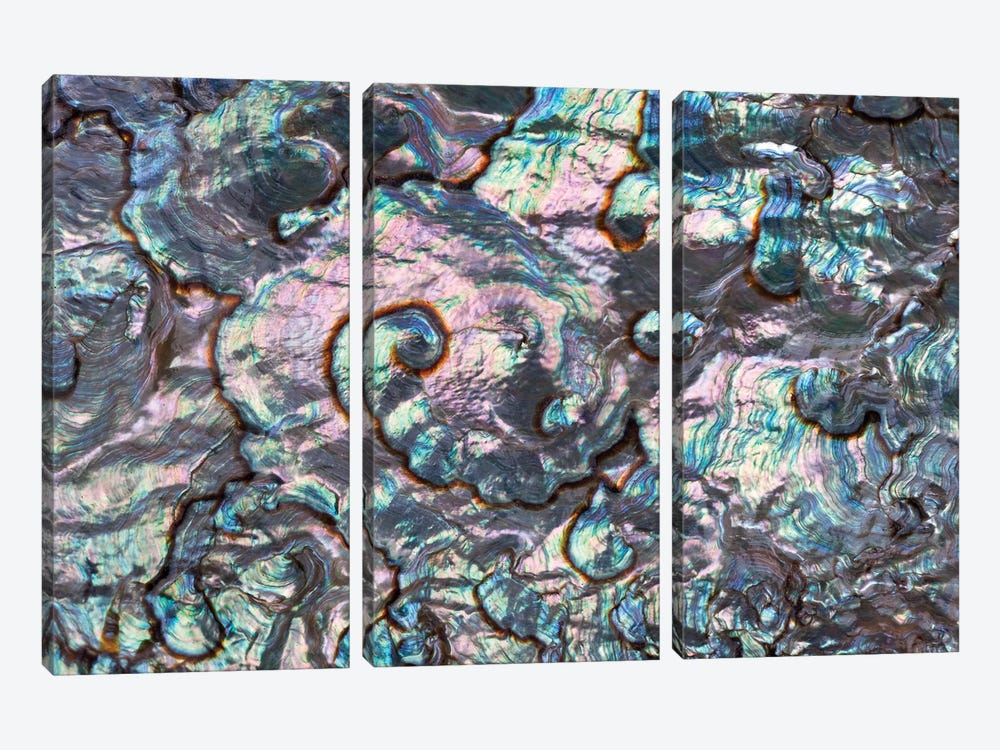 Green Abalone Shell Interior From Baja California, Collection Meeresmuseum Ozeania, Riedenburg, Germany by Ingo Arndt 3-piece Canvas Wall Art