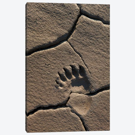 Grizzly Bear Track In Mud, Lake Clark National Park, Alaska Canvas Print #IAR15} by Ingo Arndt Art Print
