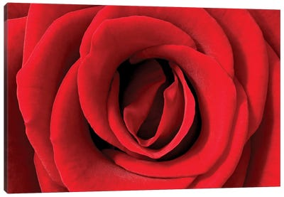 Rose Detail, Germany Canvas Art Print