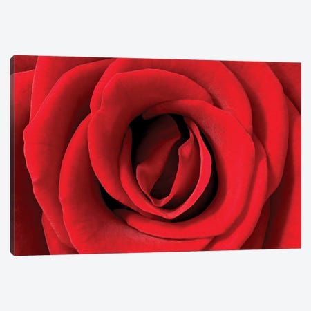 Rose Detail, Germany Canvas Print #IAR21} by Ingo Arndt Canvas Print