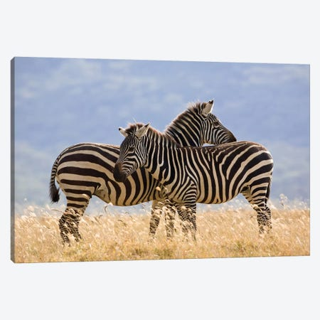 Burchell's Zebra Pair, Lake Nakuru National Park, Kenya Canvas Print #IAR5} by Ingo Arndt Canvas Artwork