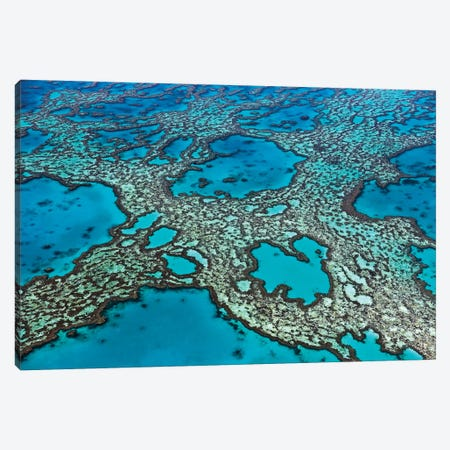 Coral Formations On Hardy Reef, Great Barrier Reef, Queensland, Australia Canvas Print #IAR9} by Ingo Arndt Canvas Art Print