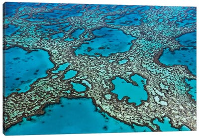 Coral Formations On Hardy Reef, Great Barrier Reef, Queensland, Australia Canvas Art Print