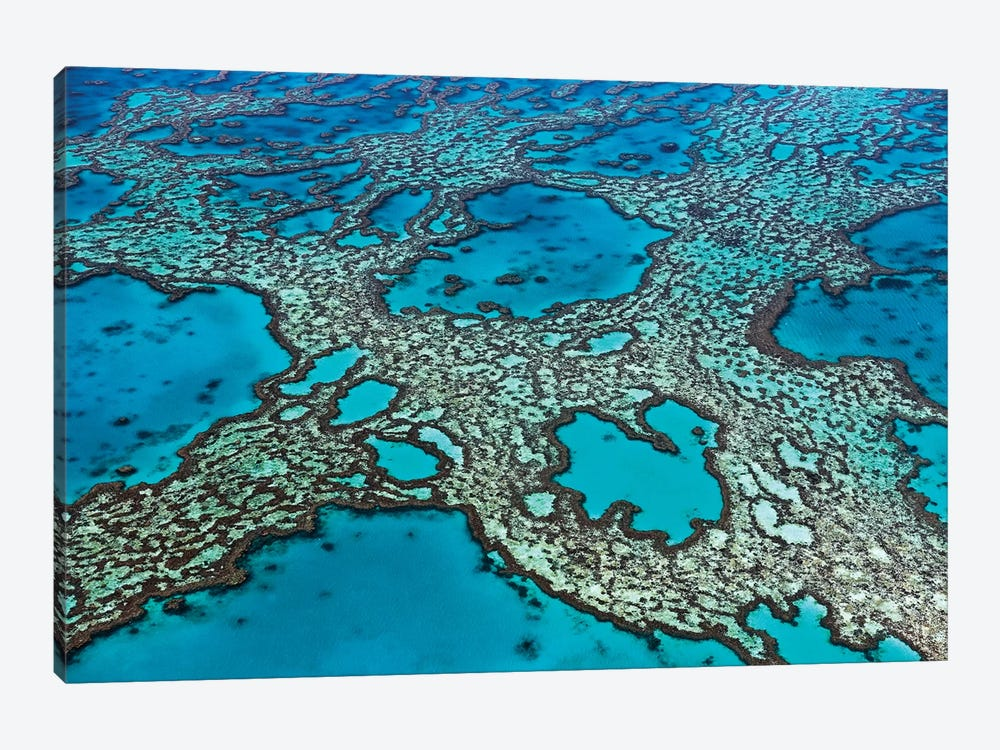 Coral Formations On Hardy Reef, Great Barrier Reef, Queensland, Australia by Ingo Arndt 1-piece Canvas Artwork