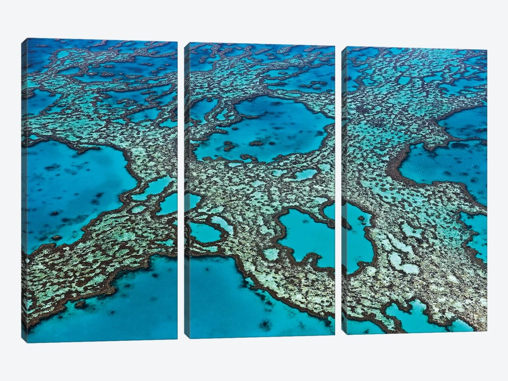 Coral Formations On Hardy Reef, Great Barrier Reef, Queensland, Australia by Ingo Arndt 3-piece Canvas Artwork