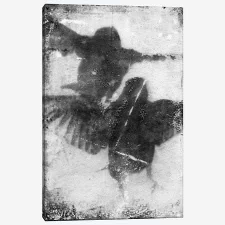 B&W Flight VII Canvas Print #IBL7} by Ingrid Blixt Canvas Artwork