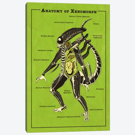 Alien Anatomy Diagram Canvas Print #ICA1049} by 5by5collective Art Print