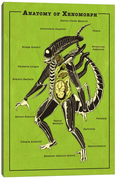 Alien Anatomy Diagram Canvas Art Print