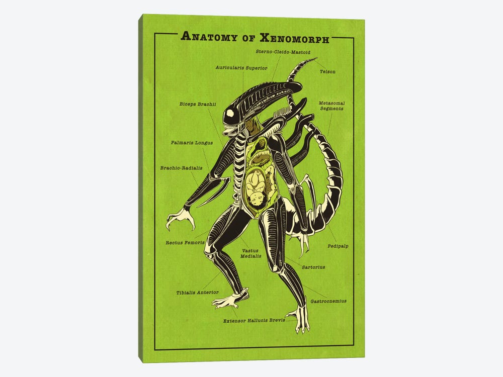 Alien Anatomy Diagram by 5by5collective 1-piece Canvas Artwork