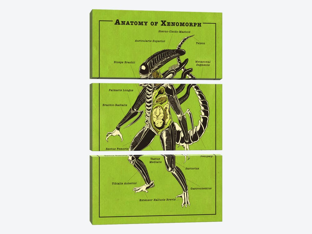 Alien Anatomy Diagram by 5by5collective 3-piece Canvas Wall Art
