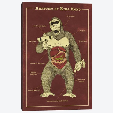 King Kong Anatomy Diagram Canvas Print #ICA1053} by 5by5collective Canvas Art