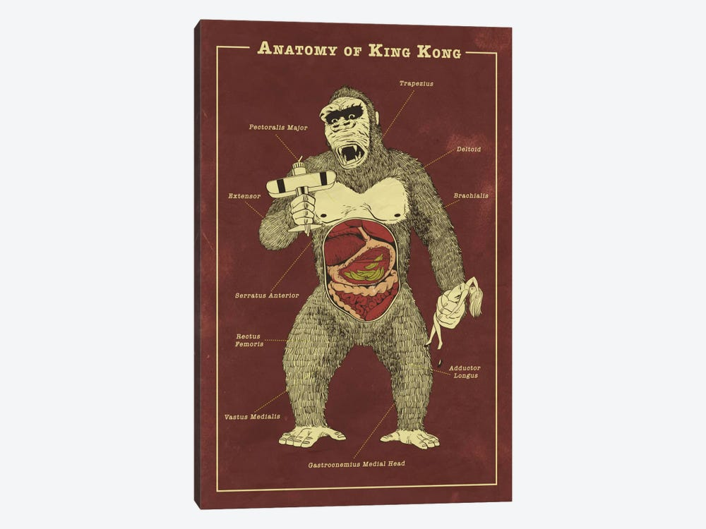 King Kong Anatomy Diagram by 5by5collective 1-piece Canvas Art Print