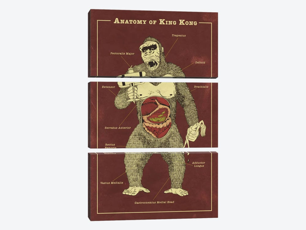 King Kong Anatomy Diagram by 5by5collective 3-piece Art Print