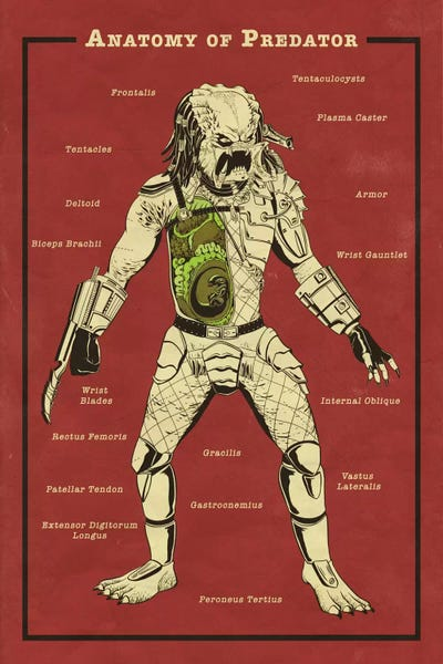 Predator Anatomy Diagram Canvas Wall Art By 5by5collective