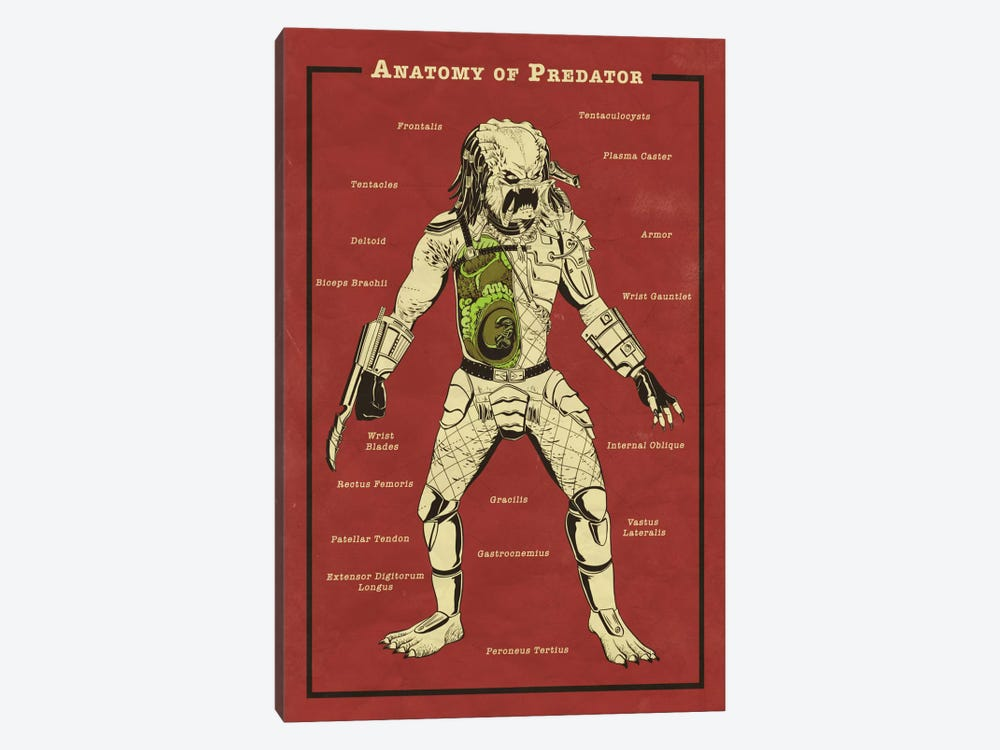 Predator Anatomy Diagram by 5by5collective 1-piece Canvas Art