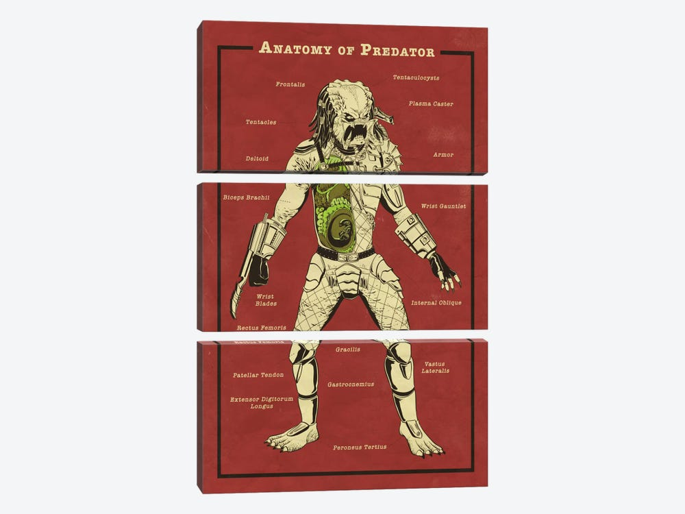 Predator Anatomy Diagram by 5by5collective 3-piece Canvas Art