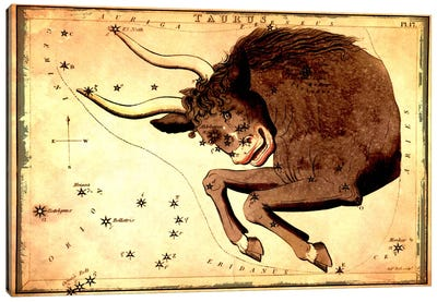 Taurus Constellation III Canvas Art Print