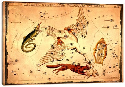 Lacerta, Cygnus, Lyra, Vulpecula & Anser Canvas Art Print