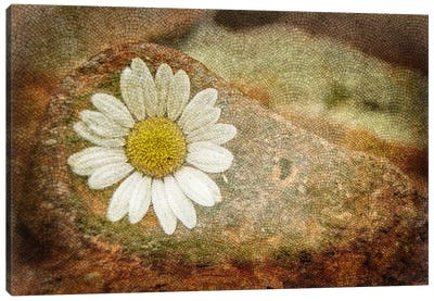 Blooming Stone Canvas Art Print