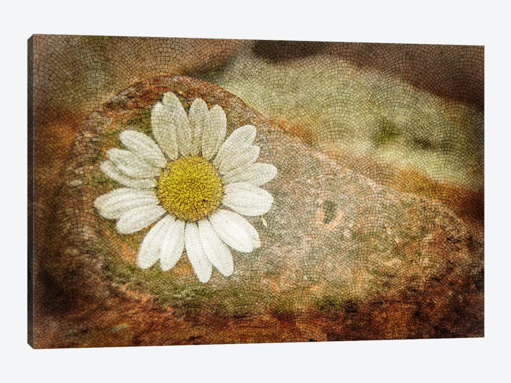 Blooming Stone by iCanvas 1-piece Canvas Art Print