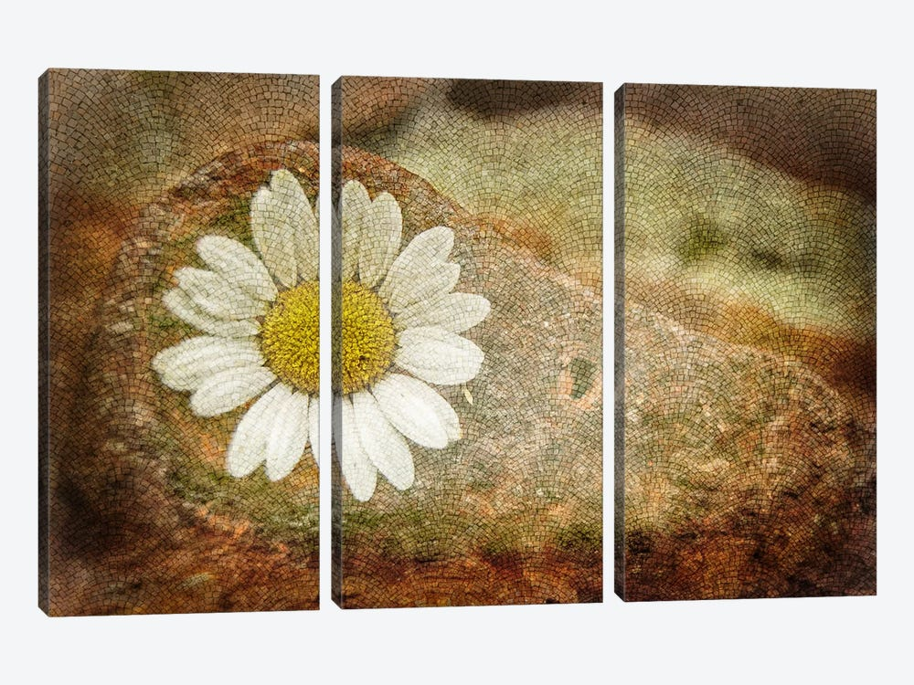 Blooming Stone by iCanvas 3-piece Art Print
