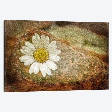 Blooming Stone Canvas Print #ICA1099} by Unknown Artist Canvas Wall Art