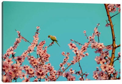 Almond Blossom Parrot Canvas Art Print