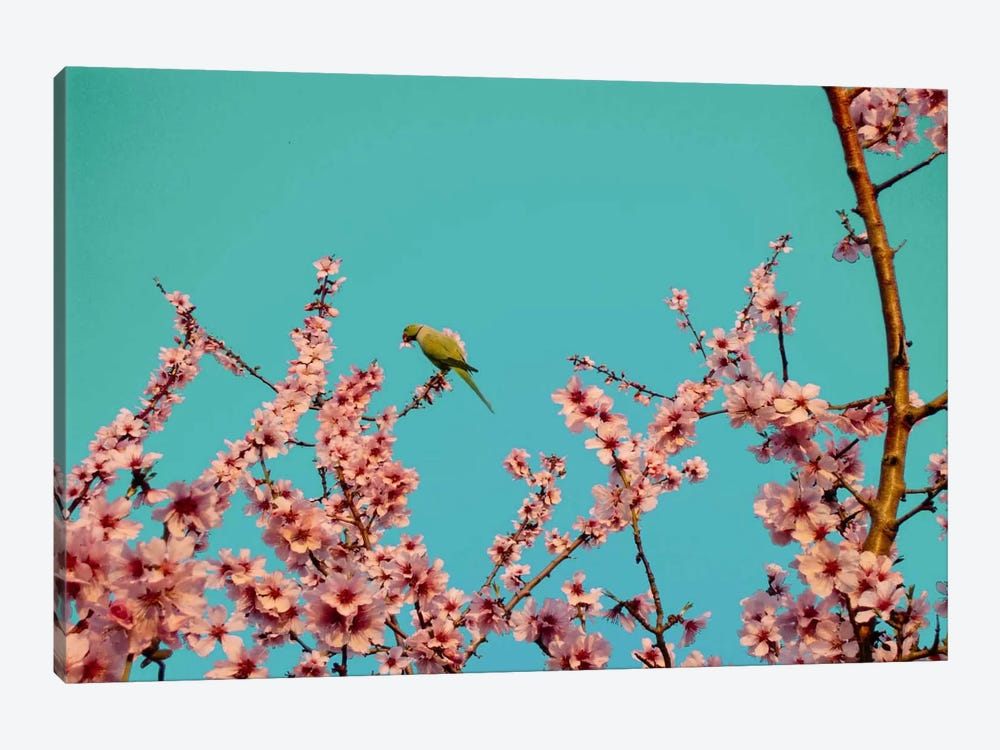 Almond Blossom Parrot 1-piece Canvas Print