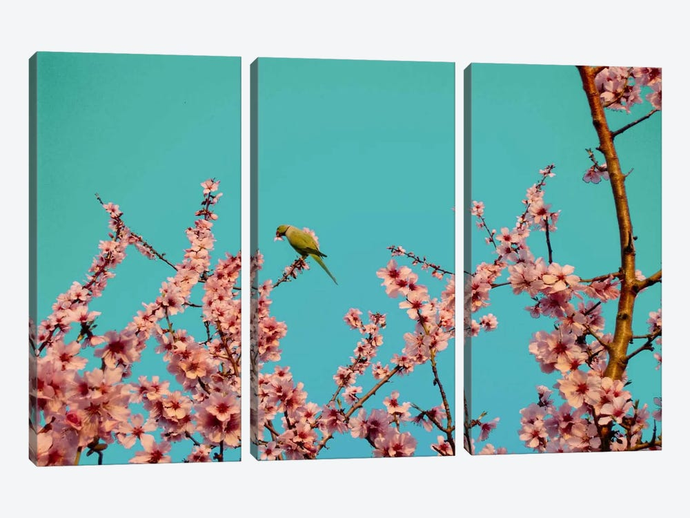 Almond Blossom Parrot 3-piece Canvas Print