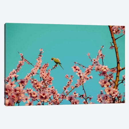 Almond Blossom Parrot Canvas Print #ICA1127} by 5by5collective Art Print