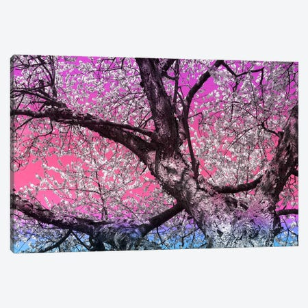 Under the Almond Blossom Tree Canvas Print #ICA1129} by 5by5collective Canvas Artwork