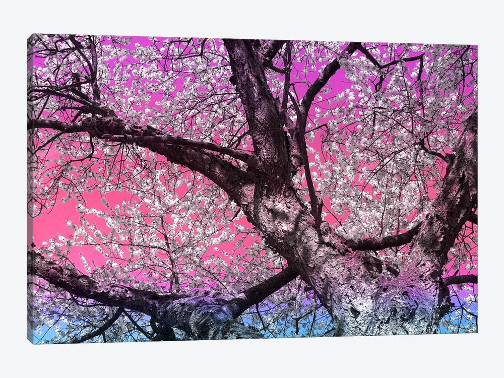 Under the Almond Blossom Tree by 5by5collective 1-piece Canvas Print