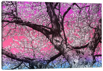 Under the Almond Blossom Tree Canvas Art Print