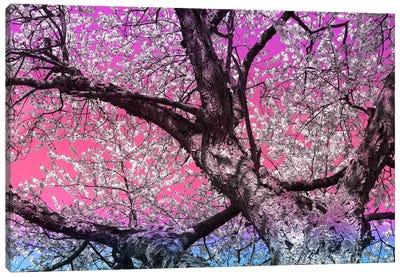 Under the Almond Blossom Tree Canvas Art Print