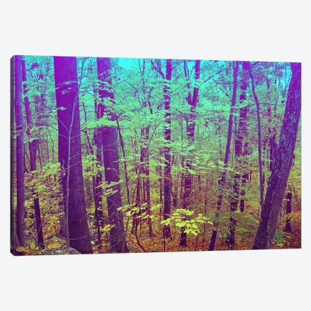 Psychedelic Forest Canvas Print #ICA1139} by 5by5collective Canvas Print